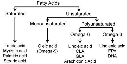 Types-of-Fatty-Acids.jpg